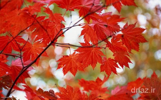 پاییز و توصیه های طب سنتی