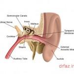 متخصص گوش و حلق و بینی در قم