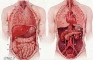 بادکش شکم بادکش درمانی حجامت خشک